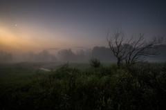 Bent by wind (k.tusnio) Tags: tree bush fog morning hdr nikon moon crestent landscape nature grass flowers flower samyang 14mm poland rogalin polska krajobraz natura