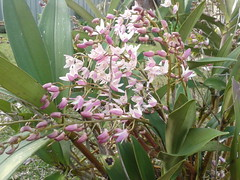 Our Orchids