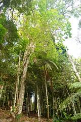 Bosque no Kinkakuji em Itapecerica da Serra (marcusviniciusdelimaoliveira) Tags: arvore tronco galho folha bosque kinkakuji itapecericadaserra templo cemitrio