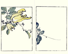 Etrog (Japanese Flower and Bird Art) Tags: flower etrog citrus medica rutaceae buncho tani nanga woodblock picture book japan japanese art readercollection