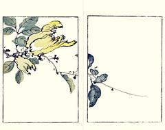 Etrog (Japanese Flower and Bird Art) Tags: flower etrog citrus medica rutaceae buncho tani nanga woodblock picture book japan japanese art readercollection