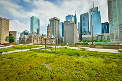 City Hall, Slighty Above (Viv Lynch) Tags: toronto cityhall downtown greenroof public city urban garden queenstreet ontario canada summer 2016