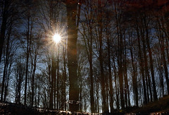 Wood after the rain (Robyn Hooz) Tags: bosco wood treviso cansiglio prealpi alberi trees sole riflesso reflection disk ray mud fango