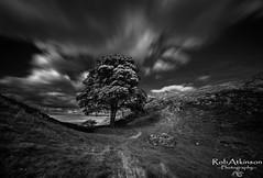 Sycamore Gap (R0BERT ATKINSON) Tags: sycamore gap northeastengland northumberland robatkinsonphotography nikond5100 sigma1020 blackwhite trees sky hadrianswall clouds sycamoregap