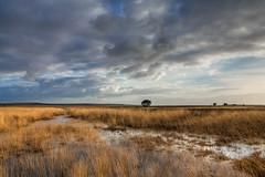 Hoge Veluwe (TIF Fotografie) Tags: winter nature landscape arnhem nederland hdr veluwe landschap hogeveluwe nationaalpark natuurenlandschap ingridfotografie