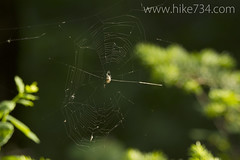 "Spiderweb • <a style=""font-size:0.8em;"" href=""http://www.flickr.com/photos/63501323@N07/7756424328/"" target=""_blank"">View on Flickr</a>"