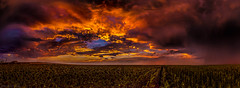 Sunset over the sunflowers (tmo-photo) Tags: colorado denver fav20 fav30 fav10 tmophoto