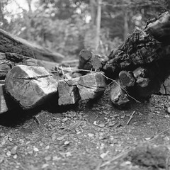 Railroad Timber - I (David Comley) Tags: wood railroad bw 120 film timber availablelight hasselblad epson acros 500cm rollfilm iphotooriginal epsonv700 adoxadonal bwfp