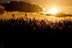Caas al Sol. (Jairo Galbis ) Tags: sunset sky espaa orange naturaleza flower tree nature colors backlight contraluz landscape atardecer spain flor paisaje colores alicante cielo rbol naranja 2012 torrevieja nikond90 jairogalbis nikkor18105mmf3556gedafsvrdx 366momentos