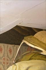 Bee Removal (W9JIM) Tags: bees 7d w9jim honeybee hive beekeeper 24105l beeremoval