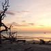 Driftwood Beach 10