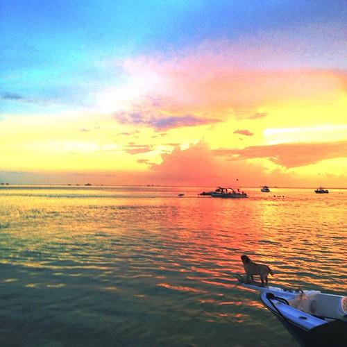 This #Pug too enjoyed the view #sandbar #elliotkey #sunset