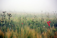 (getbehindme) Tags: flowers autumn red sea summer color colour green fall nature field grass fog digital canon germany lost photography eos rebel photo europe loneliness quiet sad veil natural smoke blossoms foggy meadow calm baltic silence poppy rgen xsi melancholic 450d 55250mm