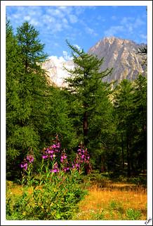 Postcard from Lavachey