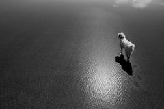 dog (Ray Byrne) Tags: blackandwhite bw dog texture beach sand pattern monotone northumberland holyisland lindisfarne raybyrne byrneoutcouk webnorthcouk