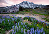 Wonderland (Aaron Reed Photography) Tags: summer mountain photography paradise photographyclass photographers mountrainier rainier stockphotos pacificnorthwest wildflowers sunrisesunset mtrainier stockimages professionalphotography blackwhitephotography mtrainiernationalpark cascademountainrange rainiernationalpark photographyschool fineartphotographs skyphotographs lakephotographs aaronreed naturephotographs abstractphotographs landscapephotographs photographytraining pacificnorthwestphotography framedartprints sunsetphotographs artphotographs sunrisephotographs aaronreedphotography surrealphotographs redphotographs waterphotographs cityscapephotographs cloudsphotographs duskphotographs reflectionphotographs paciifcnorthwest bluephotographs aaronreedlandscapephotographer aaronreedphotographer landscapephotographygallery mountainsphotographs orangephotographs pavementphotographs whatislandscapephotography whatisstockphotography aaronreedart aaronreedprints aaronreednature aaronreedaluminumartprints yellowphotographs bridgephotographs buildingsphotographs twilightphotographs roadphotographs aaronreedmetalprints aaronreedacrylicfacemountprints