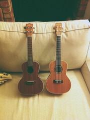 Uke buddies (mlee525) Tags: music ukulele cordoba uke musicalinstrument kala iphone vscocam
