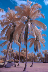 "Palm trees in the park • <a style=""font-size:0.8em;"" href=""http://www.flickr.com/photos/82709626@N00/7937200696/"" target=""_blank"">View on Flickr</a>"