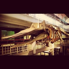 Sperm Whale #2 (akhenatenator) Tags: skeleton worth1000