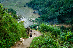 vietnam-sapa-cottage, DSC_7062.jpg (Ania Blazejewska) Tags: road dog house green home girl asian asia vietnamese quiet village path cottage peaceful vietnam hut greenery sapa riceterraces woodenhut ricerield