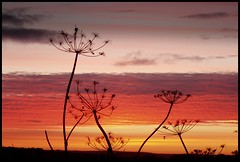 Umbell Dawn (Tragopodaros) Tags: morning autumn england sky orange sunlight sunrise dawn golden derbyshire peakdistrict september redsky goldenlight monyash umbell