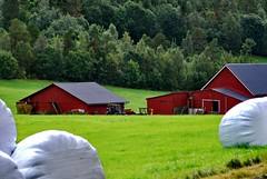 Gard - - Farm houses (erlingsi) Tags: norge farm noruega oc scandinavia volda gard sunnmøre noorwegen noreg erlingsivertsen gardshus mygearandme mygearandmepremium liaskar mygearandmebronze mygearandmesilver