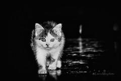 kitty (Leo a Mia) Tags: kitty cat cats black white