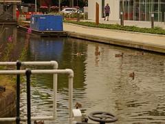 1295-11L (Lozarithm) Tags: aylesbury bucks canals guc ducks pentaxzoom k1 28105 hdpdfa28105mmf3556eddcwr