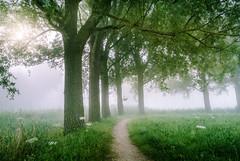 Misty Monday Morning (D.ROS) Tags: wood morning brown mist tree green grass misty fog rural sunrise path foggy nederland hazy schagen 2016