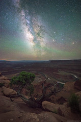 Midnight Canyons (Erik Johnson Photography) Tags: dead horse point utah canyonlands state park visitutah milkyway milky way astrophotography long exposure night sky stars heavens juniper tree lone view valley scene landscape national geograpic colorado river