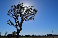 Arbre du Lac de Monteux (Jean-Paul Granier) Tags: tree sky ciel soleil sun ngc