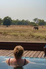 Zambia_LionCamp_291_elephant (atkiteach) Tags: zambia southluangwanationalpark southluangwa safari safaricamp camp nature naturereserve holiday rural africa lioncamp elephant elephants