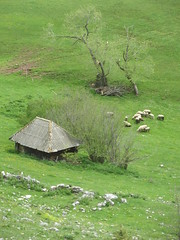 Hut and sheep grazing at Vidikovac, Uvac Nature Reserve, Serbia (Paul McClure DC) Tags: uvac naturereserve serbia srbija zlatibor druinie vidikovac sjenica balkans may2016 scenery