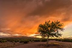 Sunset in Orange (inlightful) Tags: sunset sunrise evening morning clouds monsoon sky nature weather rain virga southwest desert newmexico trees socorrocounty dirt dirtroad rural