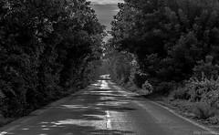 _MG_8852 () Tags: bw road tunnel dream mood traveling monochrome blackandwhite morning shadow shadows blackwhite tree trees treetunnel