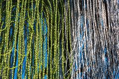 Dualismo_espressivo (Danilo Mazzanti) Tags: danilo danilomazzanti mazzanti wwwdanilomazzantiit fotografia foto fotografo photos photography albero foglie pianta colore villapallavicini
