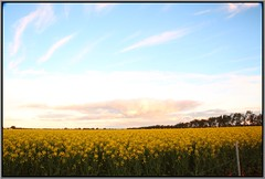 Canola and Clouds (florahaggis) Tags: horsham victoria australia pc3400 wimmera crops agriculture canola rapeseed oilseed farming clouds sky canon