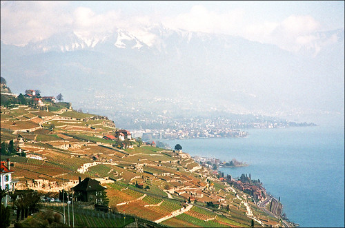 Vineyards near Montreux, Switzerland, early spring 01