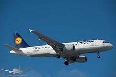 Lufthansa - D-AIPF - A320-200 (Aviation & Maritime) Tags: daipf lufthansa airbus a320 a320200 airbus320 airbus320200 osl engm osloairportgardermoen oslolufthavngardermoen osloairport gardermoen norway