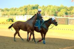 2016-08-28 (51) r8 late scratch #3 (JimFleenor) Tags: photos photography md maryland marylandracing marylandhorseracing timonium statefair horses thoroughbreds equine equestrian cheval cavalo cavallo cavall caballo pferd paard perd hevonen hest hestur cal kon konj beygir capall ceffyl cuddy yarraman faras alogo soos kuda uma pfeerd koin حصان кон 马 häst άλογο סוס घोड़ा 馬 koń лошадь outside outdoors sports sport