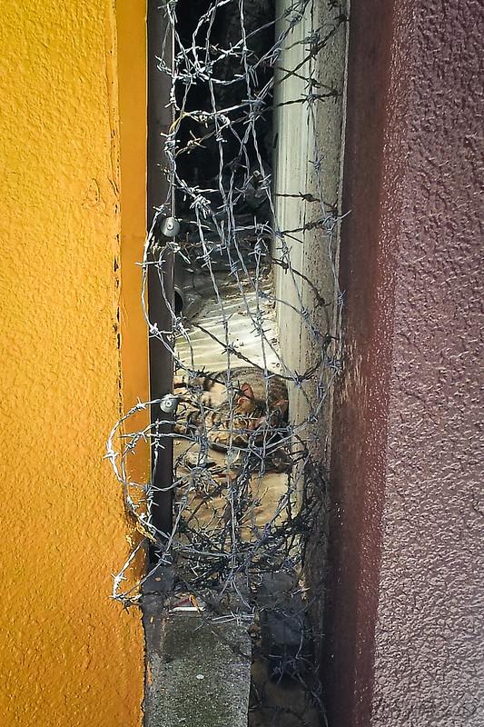 20120718-2012-07-18 11.03.17.jpg