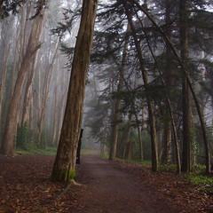 Peeking out/The Presidio (LOLO Italiana) Tags: sanfrancisco ca trees selfportrait fog landscape pathway thepresidio blackhoodedfigure