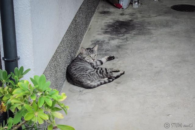 Today's Cat@2012-08-15