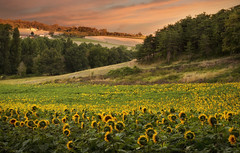 Sunflower Sunrise (Vemsteroo) Tags: morning light summer sky holiday man france flower colour beautiful sunshine weather yellow clouds rural sunrise canon french landscape dawn countryside petals flora community europe bokeh vibrant farming shed harvest progress tranquility bluesky fresh growth planning crop sunflower 5d balance rays farmer agriculture majestic southoffrance idyllic development f4 magichour bails perfection charente wealth singular newgrowth mkiii mk3 forna beautyinnature 24105mm stamant farnland