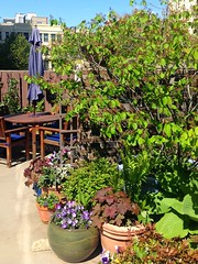 Office patio garden (Terryryan1) Tags: garden landscape backyard picnic courtyard container patio pots urbangarden favoritegarden mygardenschool
