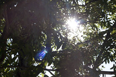 upload 1 (lindsey_loves_you) Tags: light summer sun tree green alaska google view bright genius kodiak 2012 6thphoto lindseylovesyou