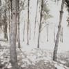 The 'Talk and Die' Syndrome {In Explore} (Irene Stylianou) Tags: trees nature digital forest landscape nikon europe cyprus explore 1855mm nikkor dslr nikondigital larnaca dx nikoncamera nikkor1855mm d80 nikond80 afsdxnikkor cyprusnature ed1855 irenestylianou ed185513556gii talkanddie talkanddiesyndrome