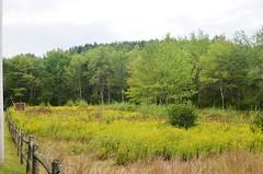 Great meadow (kuntheaprum) Tags: hiking wildliferefuge sudburyriver migratorybirds bearhill greatmeadow bearhilltower greatmeadowwildlife
