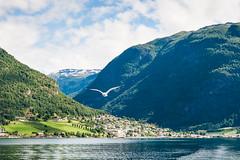 Sognefjord (jagudo) Tags: travel bird norway landscape town pueblo paisaje viajes noruega fjord pajaro fiordo sognefjord sognogfjordane
