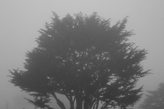 Sunny California (JB by the Sea) Tags: california tree monochrome fog montara halfmoonbay sanmateocounty coastside september2012